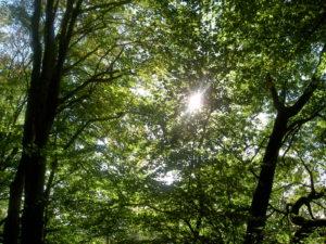 Wald Baumkronen
