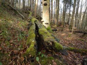 Wald Totholz Baumstamm