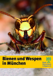 Bienen und Wespen in München BUND Naturschutz