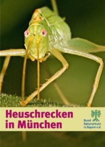 Heuschrecken in München BUND Naturschutz