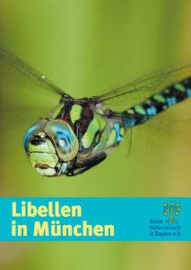 Libellen in München BUND Naturschutz
