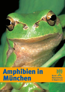 Amphibien in München BUND Naturschutz