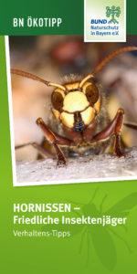 Hornissen friedliche Insektenjäger Verhaltenstipps BUND Naturschutz