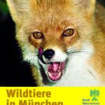 Wildtiere Säugetiere Fuchs München