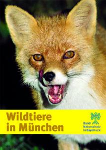 Wildtiere in München BUND Naturschutz