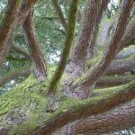 AK Baumschutz