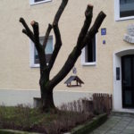 Baumschutz Verordnung München