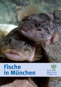 Fische in München BUND Naturschutz