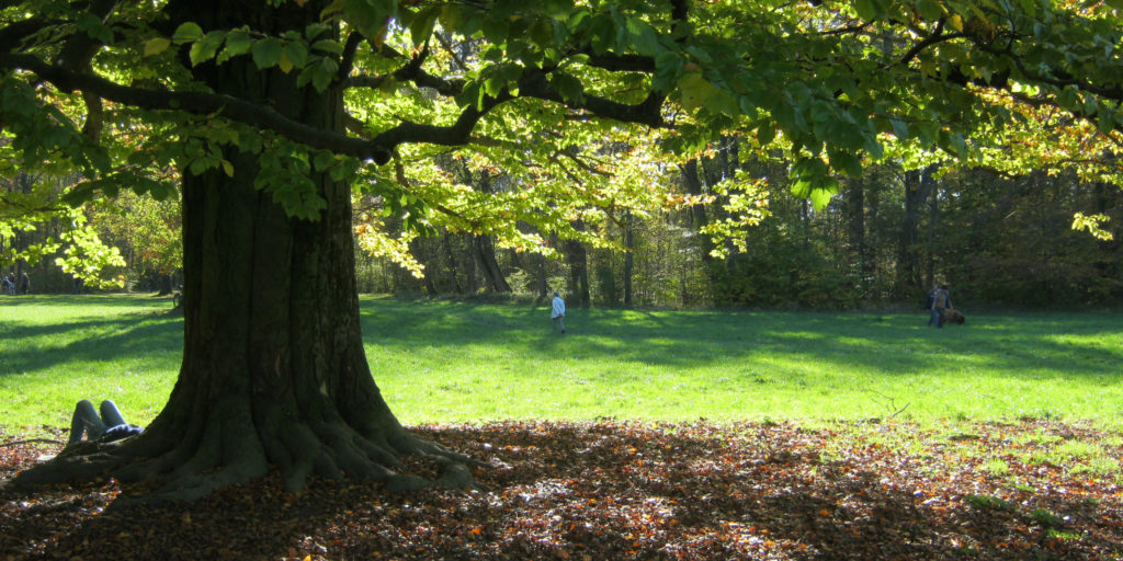 Baumschutz_Bild3_beschnitten