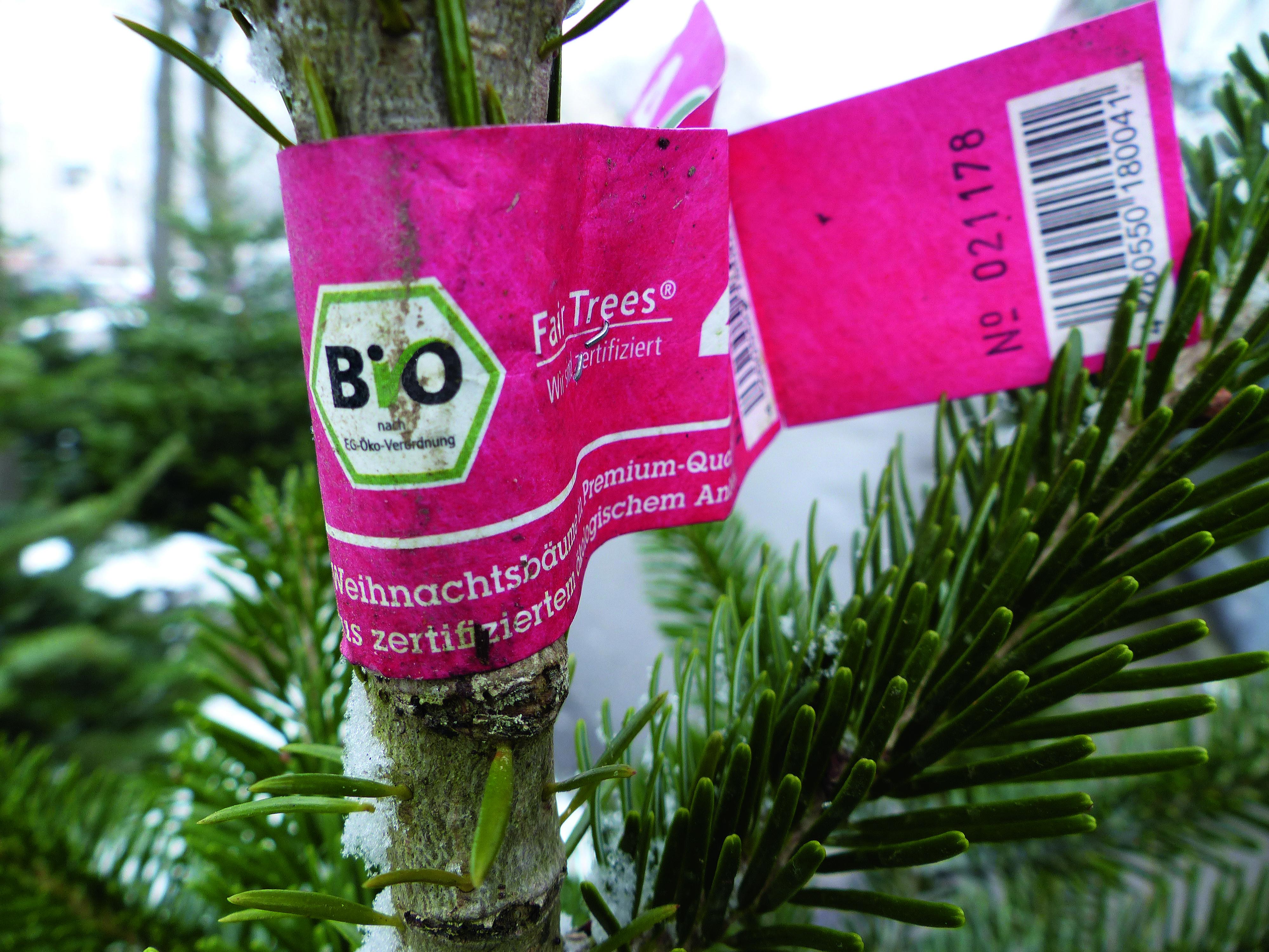 Frohe Weihnachten Philippinisch.Bio Weihnachtsbaum Munchen Neujahrsblog 2020