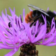 Initiative Bienenheld*in