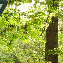 Sendung Juni 2020: Mehr Natur in Wald und Flur: Chancen und Grenzen für den Naturschutz