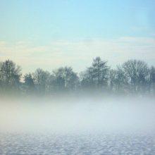 Auf winterlicher Spurensuche in Stadt und Natur