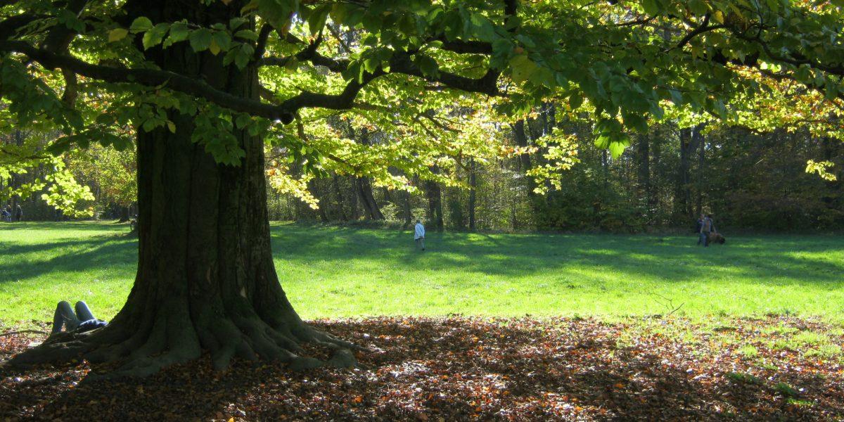 Baumschutz-Sprechstunde