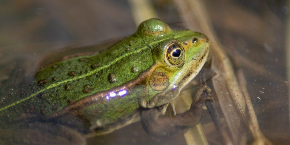 Amphibienweiher im Perlacher Forst