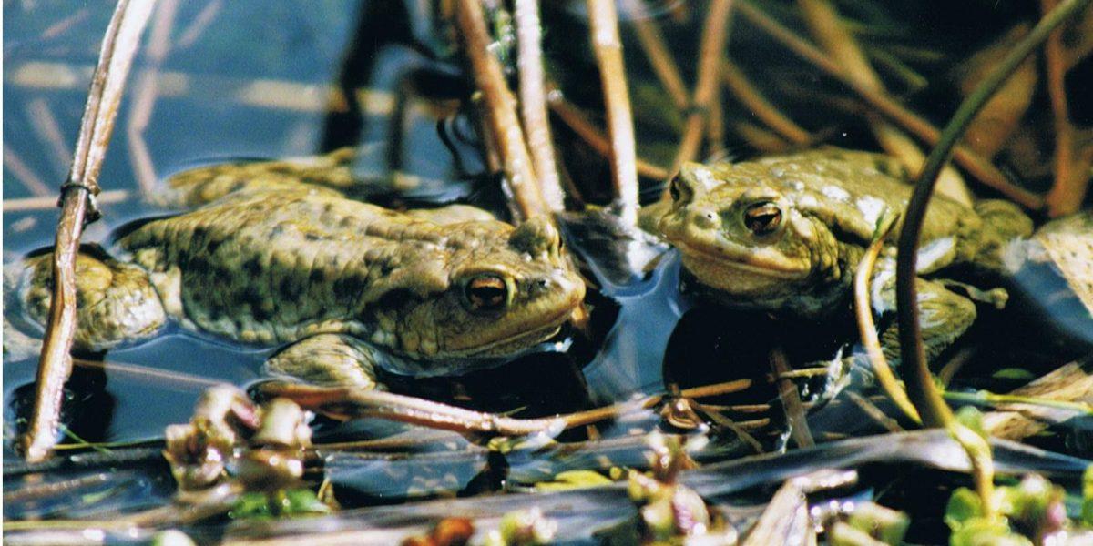 Amphibien in München