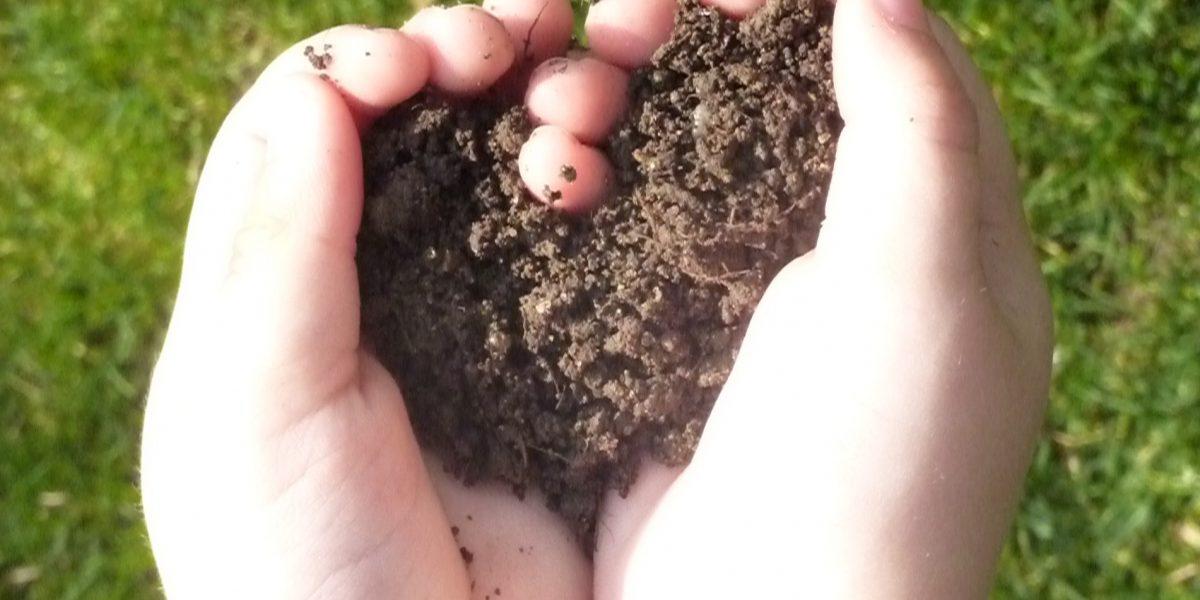 Kompost statt Torf verwenden