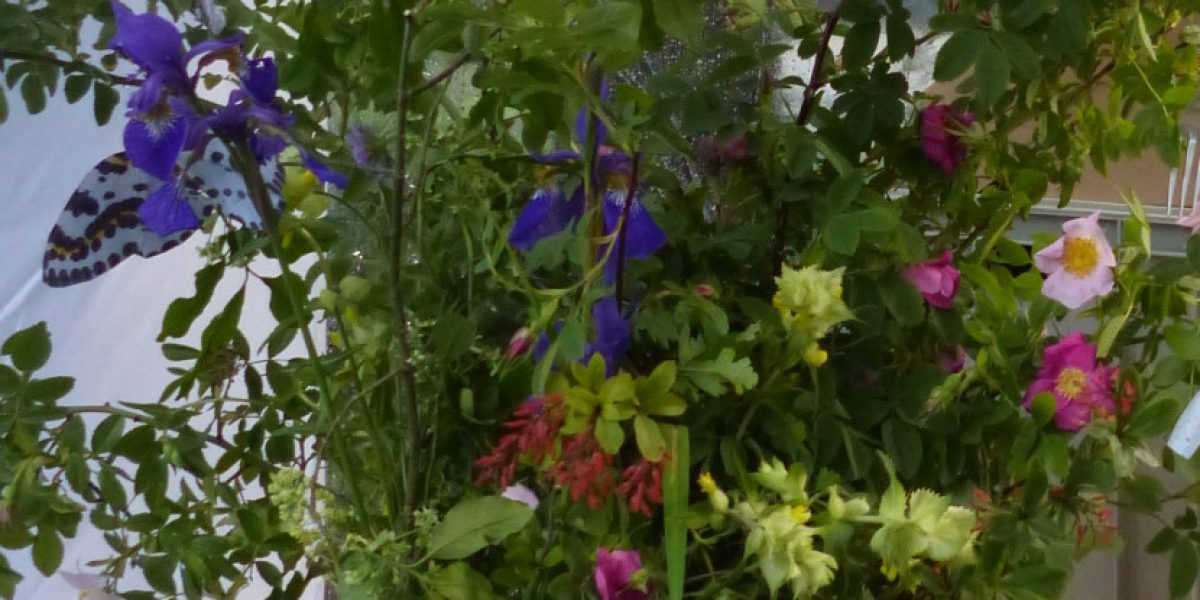 Vielfalt pflanzen