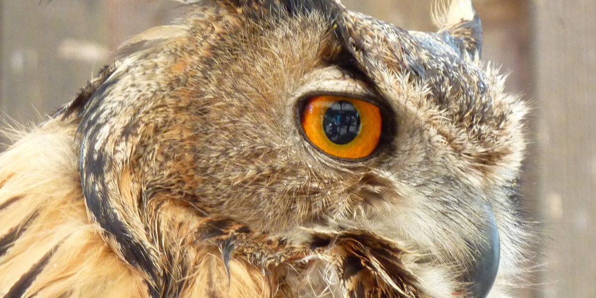BUND Naturschutz klagt erfolgreich gegen Baumaßnahmen im Isartal