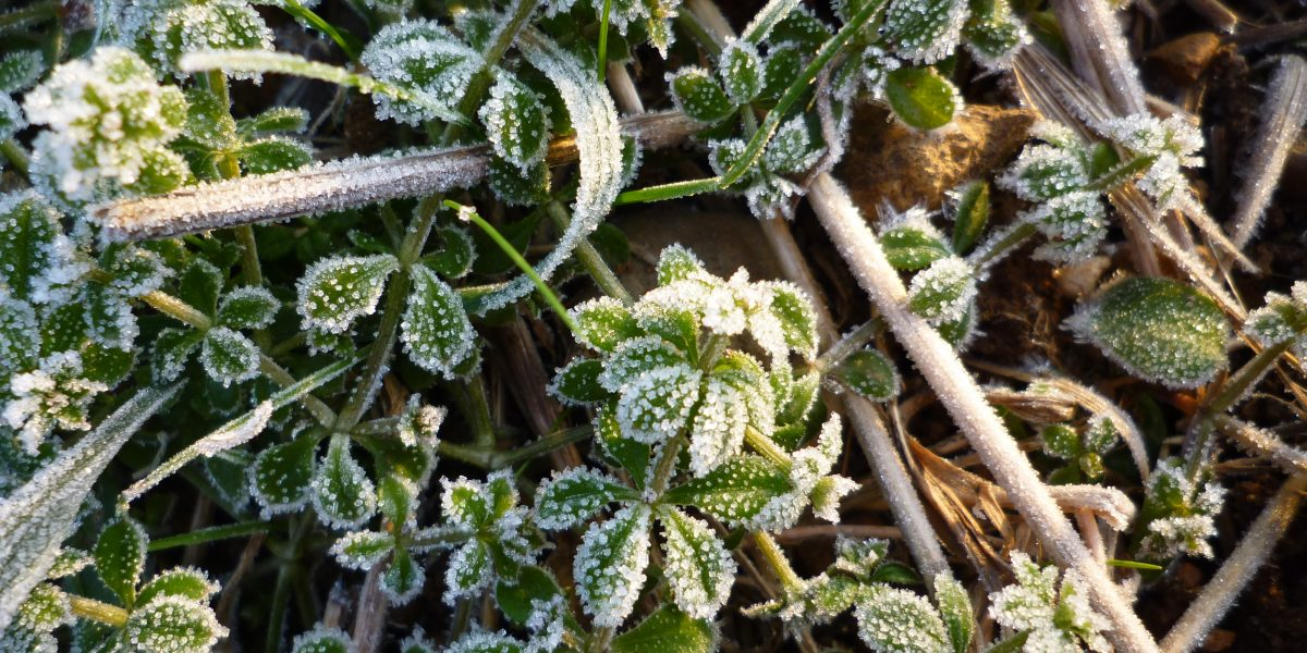 Den Naturkreislauf unterstützen - Herbst und Winter