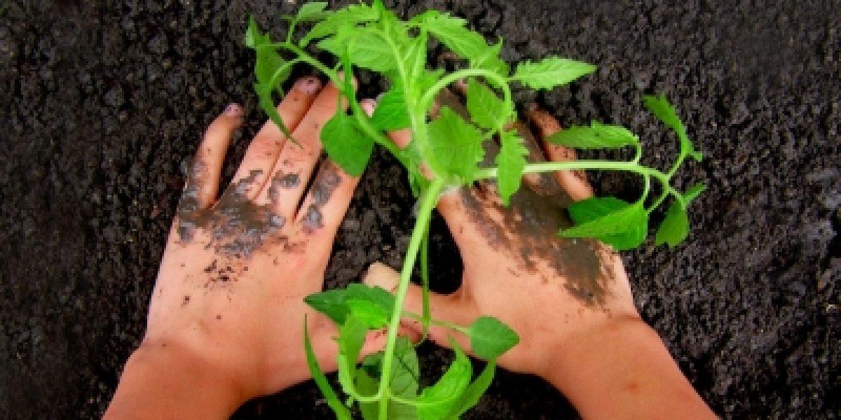 Bio-zertifizierte Samen und Pflanzen verwenden