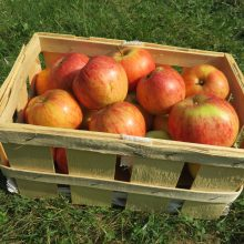 BN rät zur Apfelsaison: Bio auch bei Äpfeln
