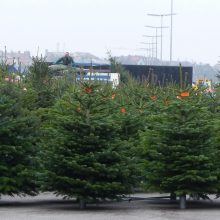 BUND Naturschutz empfiehlt Bio-Weihnachtsbäume