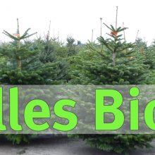 BUND Naturschutz wirbt für Bio-Weihnachtsbäume