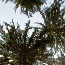 Sendung Juni 2019: Unter Ulmen – macht der Wald die Flatter?