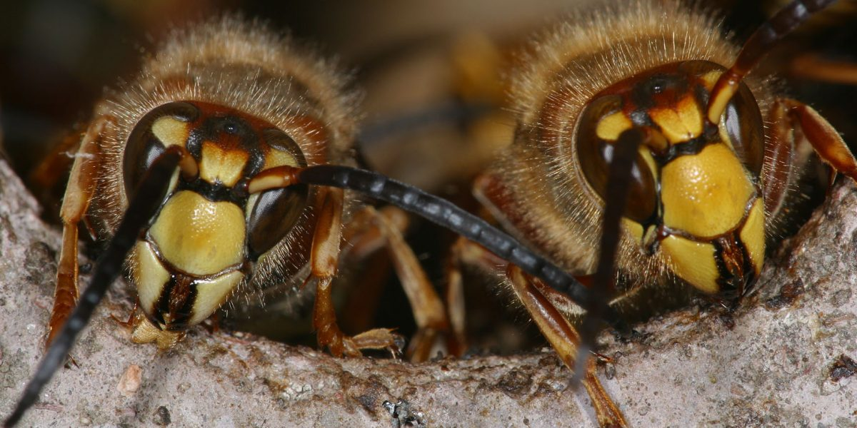Bienen und Wespen