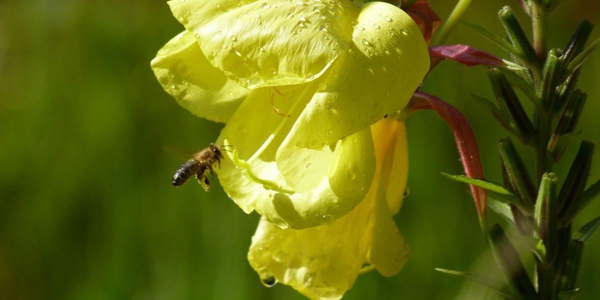 Insekten in München