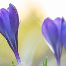Frühjahrsputz im Garten hat noch Zeit